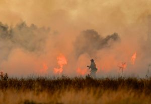 Australia's Burning and How You Can Help